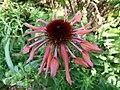 Flower bb1.jpg