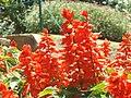 Flower bed Hakgala Garden.jpg