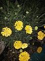 Flowerhome.jpg