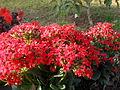 Flowers in Dalat 3.jpg