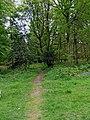 Footpath in Wyre Forest - geograph.org.uk - 1307189.jpg
