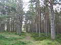 Footpath into the forest - geograph.org.uk - 548710.jpg