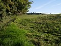 Footpath near Pilsdon - geograph.org.uk - 563392.jpg