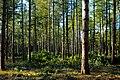 Forest (6777764806).jpg