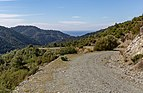 Forest road in Troodos Mountains, Cyprus 04.jpg