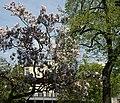 Frühling - Spring - Bleibtreustraße - Berlin - panoramio.jpg