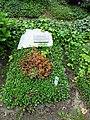 Friedhof heerstraße berlin 2018 05 012 - 16.jpg