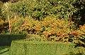 Fuchsias in the sub-tropical garden, Tregenna Estate - geograph.org.uk - 1551919.jpg