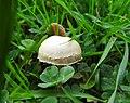 Fungi (30375519265).jpg