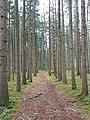 Göfis-forest near Gasserplatz-02ASD.jpg