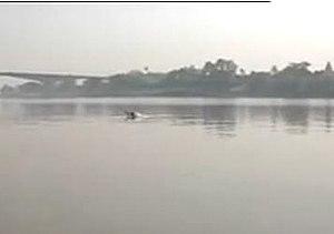 Vikramshila Gangetic Dolphin Sanctuary - Gangetic Dolphin At Vikramshila Setu