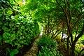 Garden Greenery.jpg