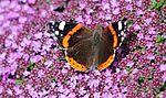 Garden colours IMG 0202 (14442110114).jpg