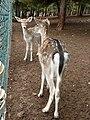 Gaziantep Zoo 1260105.jpg