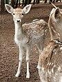 Gaziantep Zoo 1260106.jpg
