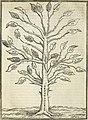 Geneologia de gli dei - i qvin deci libri (1547) (14589748599).jpg