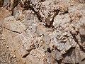 Geologic formations at Skull Rock (29042075526).jpg