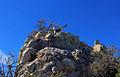 Gfp-texas-big-bend-national-park-rock-climb-up.jpg