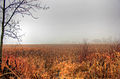 Gfp-wisconsin-madison-misty-marsh.jpg