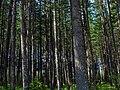 Gifford Pinchot National Forest in Washington 2.jpg