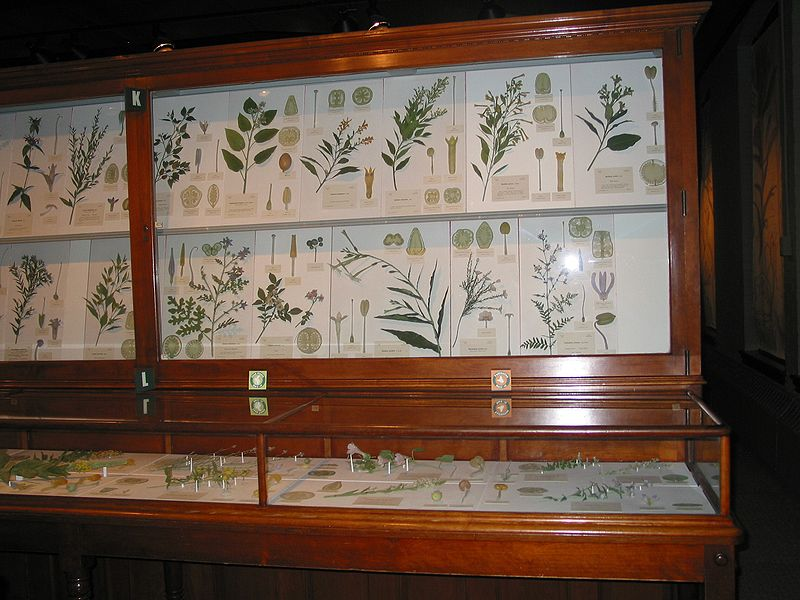 File:GlassFlowers4HMNH.jpg