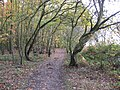 Gleadthorpe New Plantation - Footpath View - geograph.org.uk - 1036742.jpg