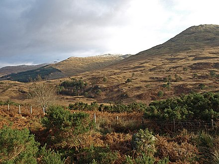 Remnants of the Caledonian forest in Glen Falloch.