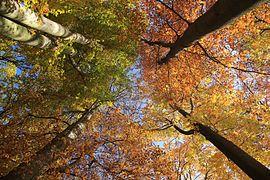 Grünfelder Park bei Waldenburg in Sachsen ...IMG 0586ВЕ76.jpg