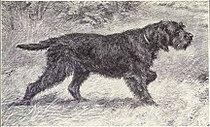 Griffon Boulet from 1915.JPG