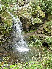 Trillium Gap Trail - Wikipedia