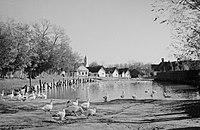 Gyarmat 1939, Kacsaúsztató. Fortepan 27894.jpg