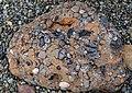 Haida Gwaii (Queen Charlotte Islands) - Graham Island - interesting rocks on the Hecate Strait shoreline near Balance Rock - (21549016392).jpg