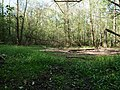 Hambach forest 61.jpg