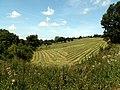 Hay Meadow - geograph.org.uk - 520180.jpg