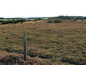 European nightjar - Heathland is a favoured habitat