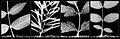 Herbarium - Fotogram.jpg