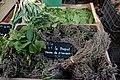 Herbes de Provence.jpg
