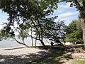 Herrsching - Baum am Ufer.JPG