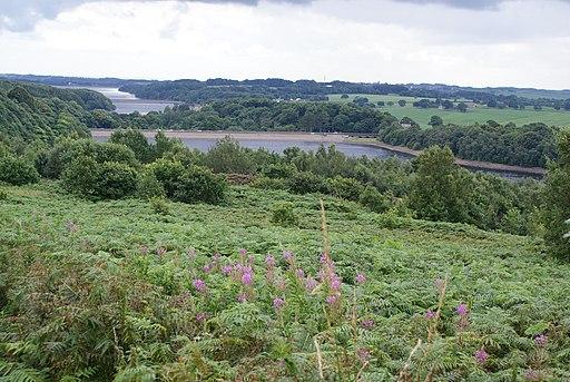 Higher ground above Anglezarke Reservoir - geograph.org.uk - 1690621