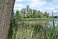 Hinterer Roxheimer Altrhein DSC 0296 Blick von der Straße.jpg