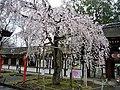 Hirano Shrine 平野神社 - panoramio (2).jpg