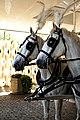 Horse drawn hearse horses City of London Cemetery 9 lighter.jpg