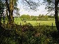 Horses at pasture - geograph.org.uk - 167790.jpg