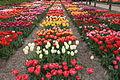 Hortus Bulborum 2014-04-24-04.jpg
