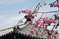 Horyuji Temple 11.JPG