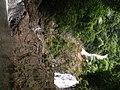 Huay Toh Watherfall - Nationak park Panom Bencha - panoramio - Thajsko.jpg
