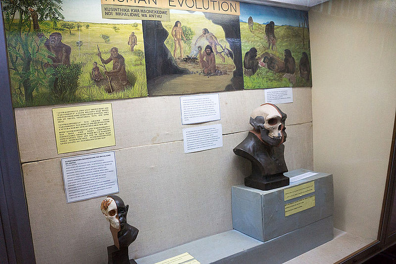 Human Evolution Museum Of Natural History