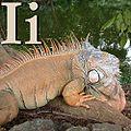 I is for Iguana.jpg