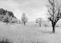 Idyllisches Landschaftsbild - CH-BAR - 3239663.tif
