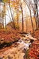 Il monte Polveracchio in autunno inverno il ruscello.jpg